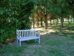 A shadey bench