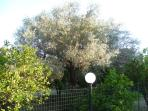 View of Orange & Olive Grove seen from below the balcony