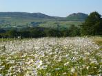 Views - from beautiful wildflower meadows & doorstep walks - The Roaches one of top ten walks