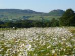 Views - from beautiful wildflower meadows & doorstep walks - The Roaches one of top ten walks