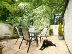 The south facing patio area-too hot for some, Benson our Labrador helping out!