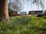 Four Seasons large front garden at Easter tide  with daffodils. Quiet , peaceful select location.