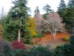 Beautiful Autumn colors at Dawyck Botanical garden