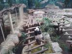 Panda at Beauval zoo - 20 mn des Gîtes du Conon