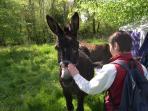 Donkey ride - 5 mn des Gîtes du Conon