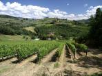 June at Podere Vignola