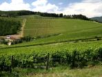 Vineyards on the other side of the hill