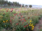 Vegetable garden east