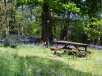 The bluebell woods near the Charente River at Le Magnou
