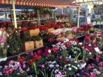 Daily flower market in the Cours Saleya