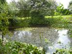 Natural lake in the 3 acre garden