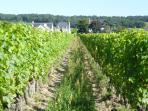 View of the local vinyard in Saint Nicolas de Bourgueil