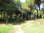 Communal forestry area within domaine