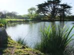 Fir Tree pond at our fishery only 30 metres from the Farmhouse