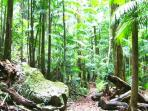 Take a Rainforest Walk
