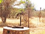 Braai/Barbeque area overlooking the water-hole.
