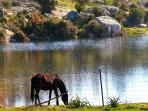 horses and lake 25 km from oristano