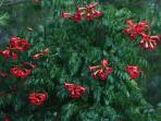 Otras fotos: tutores con flor desde Mayo hasta Octubre