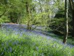 A short walk from the door to the bluebell woods