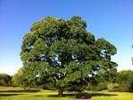 Curwen Woods Parkland