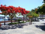 The beautiful tree-lined promenade in Playa San Juan