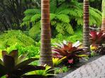 Entry Path Palms and Bromeliads