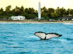 Visit the turtle reserve all year long and watch whales from August to October