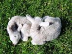 Sleeping twins.