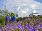 Eden Project in easy reach