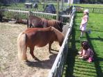 Children friendly farm West Wittering