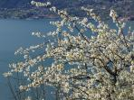 Spring time at Borgo Verginate