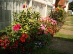 More flowers in the front. 'Bring me sunshine......tra, la la.'