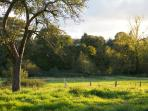 peaceful rural view over the orchard and meadow down to the stream at La Befferie