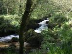 Spring at a Helford river creek