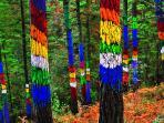 Bosque pintado de Oma, realizado por Agustín Ibarrola, a 6 kms.de la casa. Ideal para el senderismo
