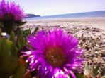 spiaggia di lido fiori