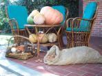 abbiamo raccolto le zucche, le castagne ed i funghi!