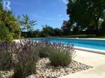 Lavender by the pool