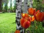 Jardi a la primavera
