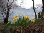 Wordsworth's daffodils