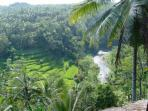 The best view in Ubud with Ayung River and the rice terrace from the main living room