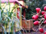 graines de palmiers et Ti Kaz Zépices