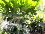 Jardin de Ti Kaz Fleurs