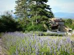 Follow the lavender walk to the pool