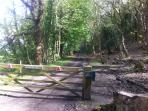 Part of the driveway to the Boathouse showing some of the forest