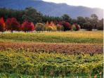 Bright is full of wineries and eateries with beautiful scenery.