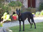 Our dog Nicole in the Courtyard