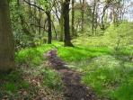 Many charming woodland walks right from the doorstep