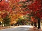 Autumn is a magical time in Bright. Mother Nature at her beautiful best.