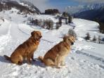 Hour-long winter walks on excellently prepared winter hiking trails, also perfect for dogs. Our dogs